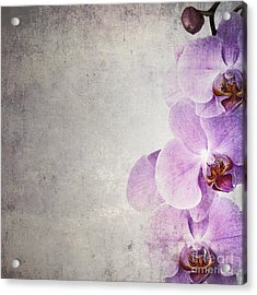 Vintage Orchids Acrylic Print by Jane Rix