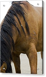 Acrylic Print featuring the photograph War Horse by Lorraine Devon Wilke