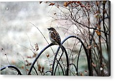 Acrylic Print featuring the photograph Watchful Eye by Elizabeth Winter