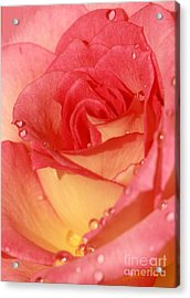 Wet Rose Acrylic Print by Sabrina L Ryan