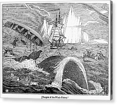 Whaling, 1833 Acrylic Print by Granger