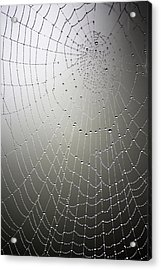 What A Tangled Web.... Acrylic Print