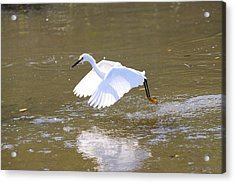 Acrylic Print featuring the photograph White Egret by Jeanne Andrews