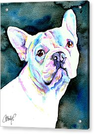 White French Bulldog Acrylic Print