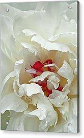 White Peony Acrylic Print