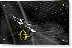 Wicked Web Acrylic Print by Brian Stevens