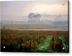Acrylic Print featuring the photograph Wine Field by Werner Lehmann