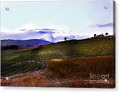 Wine Vineyard In Sicily Acrylic Print by Madeline Ellis