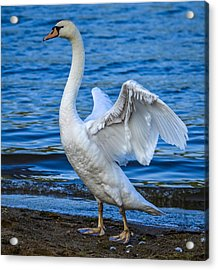 Wings And Waves Acrylic Print by Brian Stevens