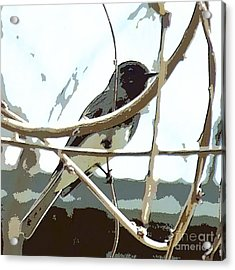 Winter Bird Acrylic Print by Artist and Photographer Laura Wrede