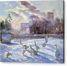 Winter Geese In Church Meadow Acrylic Print by Timothy Easton