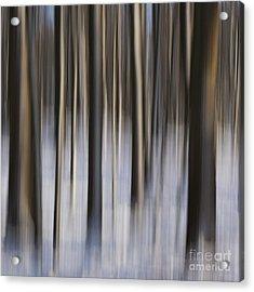 Woodland Fantasy Acrylic Print by Heiko Koehrer-Wagner