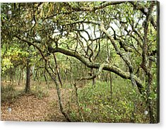 Woodlands Acrylic Print by Gregory Colvin