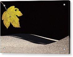Yellow Leaf Acrylic Print by Michael Mogensen