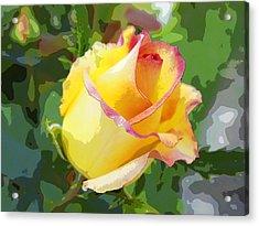 Yellow Rose Acrylic Print by Anne Mott