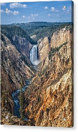 Yellowstone Lower Falls Acrylic Print