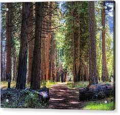 Yosemite Trail Acrylic Print by Stephen Campbell