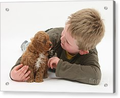 Young Boy With Cockerpoo Pup Acrylic Print