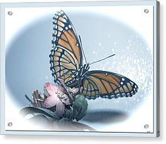 Butterfly Collection Design Acrylic Print by Debra     Vatalaro
