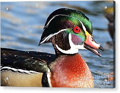 Male Wood Duck Acrylic Print
