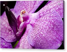 Acrylic Print featuring the photograph Orchid Flower Bloom by C Ribet
