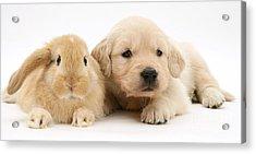 Rabbit And Puppy Acrylic Print by Jane Burton