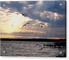 Seagulls In Flight Acrylic Print by Valia Bradshaw