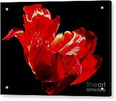 Tulipe Acrylic Print by Sylvie Leandre