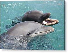 Atlantic Bottlenose Dolphins Acrylic Print by Dave Fleetham