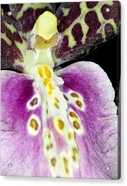 Acrylic Print featuring the photograph Exotic Orchid Flower by C Ribet