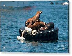 Monterey Harbour Acrylic Print