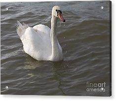 Swan Acrylic Print by Odon Czintos