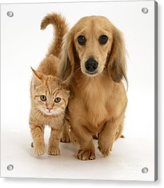 Kitten And Puppy Acrylic Print by Jane Burton