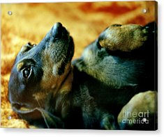 Lazy Afternoon Acrylic Print by Angel  Tarantella
