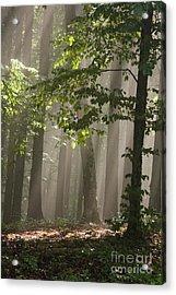 Forest Acrylic Print by Odon Czintos