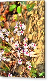 Acrylic Print featuring the photograph Flowers by Puzzles Shum