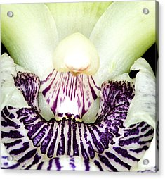 Orchid Flower Bloom Acrylic Print by C Ribet
