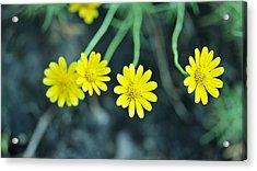 Flower Acrylic Print by Gornganogphatchara Kalapun