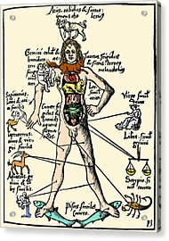 16th-century Medical Astrology Acrylic Print by Cordelia Molloy