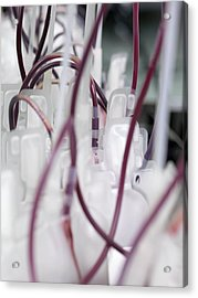 Donor Blood Processing Acrylic Print by Tek Image