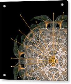 180 Acrylic Print by Peter Holme III