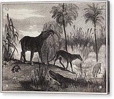1837 Extinct Prehistoric Animals Paris Acrylic Print by Paul D Stewart
