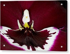 Exotic Orchid Flowers Of C Ribet Acrylic Print by C Ribet