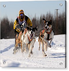 2011 Limited North American Sled Dog Race Acrylic Print by Gary Whitton