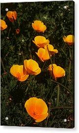 Big Sur California Acrylic Print