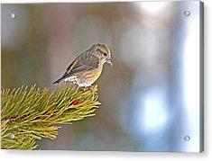 Bird Acrylic Print by Elijah Weber