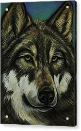 Blue Wolf Acrylic Print by Lucy Deane
