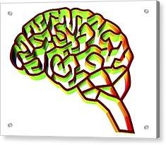 Brain Complexity, Conceptual Artwork Acrylic Print by Pasieka