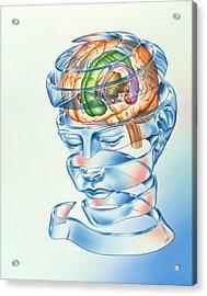 Brain Limbic System Acrylic Print by John Bavosi