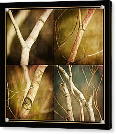 Branching Out Acrylic Print by Bonnie Bruno